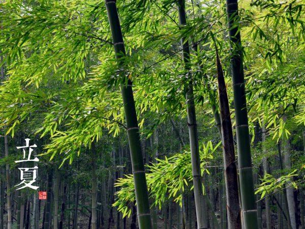 Začetek poletja (立夏 Lìxià) ali 7. sončno obdobje (5.5. do 20.5.)