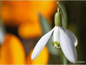 Začetek pomladi (立 春 Lìchūn) ali 1. sončno obdobje: Skrb za dobro počutje in zdravje spomladi