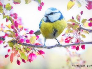 """""""Pomladansko enakonočje"""" (春分 Chūnfēn) ali 4. sončno obdobje (od 20. marca do 4. aprila)"""