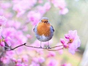 """""""Pomladansko enakonočje"""" (春分 Chūnfēn) ali 4. sončno obdobje (od 21. marca do 5. aprila)"""