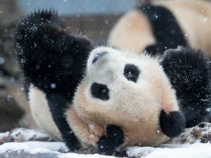 """""""Rahel sneg"""" (小雪 Xiǎoxuě) ali 20. sončno obdobje"""